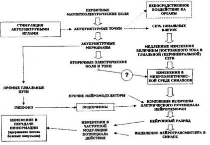 f800cd991422 Доктор медицины РИЧАРД ГЕРБЕР
