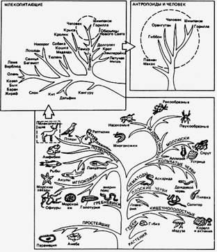 Биологи открыли разновидность амеб каждая из которых знакомства умань без регистрации фотострана